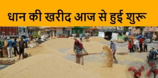 Relief to farmers of Haryana, procurement of paddy started from today (4)