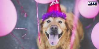 Here is how you should celebrate your fur-baby's birthday