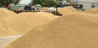 Farmers from outside states will also be able to sell paddy in Haryana