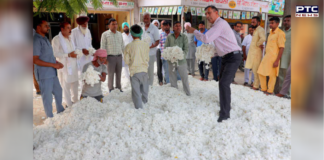 Cotton farmers forced to sell below MSP to private players