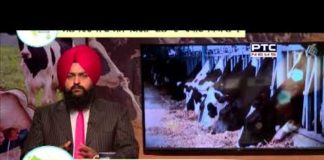 Asees Dairy Farm Helpline | How to prepare animals to become champions of fairs Episode 03