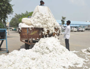 Procurement agencies in state have so far procured around 13 lakh quintals of cotton: Lal Singh