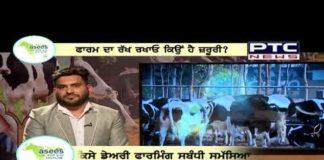 Asees Dairy Farm Helpline | Getting more milk is a challenge Episode 05 | Season 01
