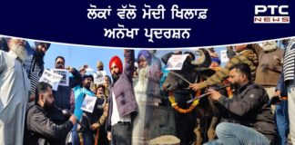 Protestors play bean infront of buffalo at Amritsar