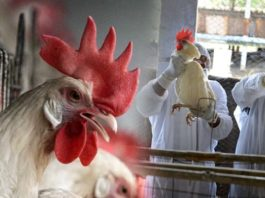 Bird Flu in India: The Avian Influenza (Bird Flu) positive samples have been confirmed from nine states including Delhi and Maharashtra.