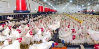 Avian Influenza in India: India said that Avian Influenza confirmed in 5 States for poultry birds while 9 states confirmed it in crows.