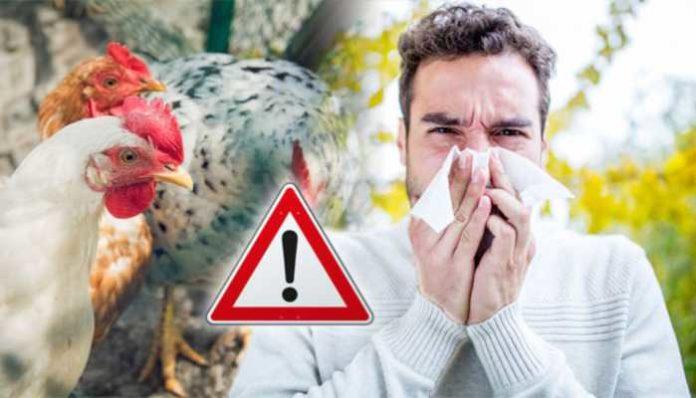 Bird Flu Panchkula