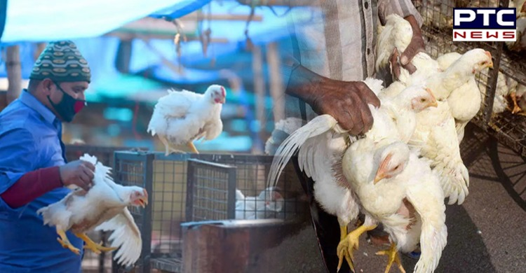 Avian influenza: After bird flu virus was confirmed in Mohali, Punjab, culling process will commence in the Derabassi on Friday.