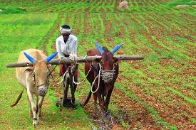 Budget 2021 : Government commits to double farmers' income by 2022 : Finance Minister