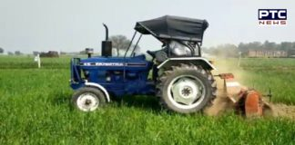 UP and Haryana farmers Destroyed wheat with tractor