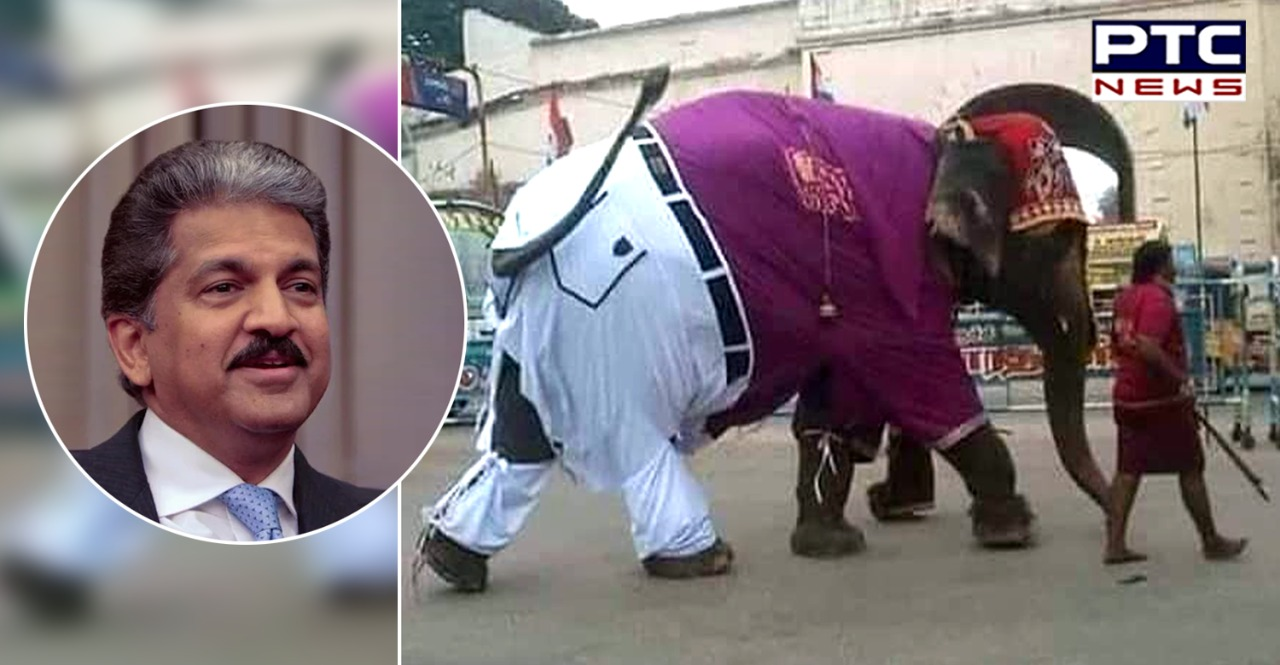 Elephant was going on the road wearing pants and shirt, Anand Mahindra said – 'Incredible India'