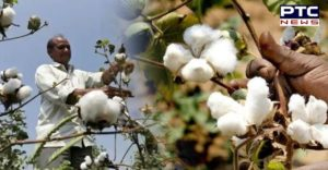 Pakistan's economic body lifts ban on import of cotton and yarn from India