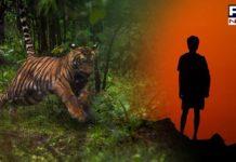 Karnataka: 8-year-old boy mauled to death by a 'man-eater' tiger
