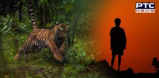 Karnataka: 8-year-old boy mauled to death by a 'man-eater' tiger