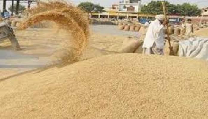 Wheat procurement Haryana