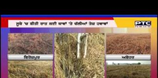 The unseasonal rains in the state ruined the crops