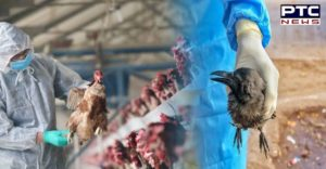 Bird flu cases found in Ludhiana, area in Kila Raipur village declared 'infected zone'