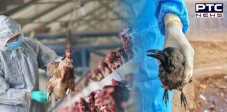 Bird flu found in Ludhiana, area in Kila Raipur village declared 'infected zone'