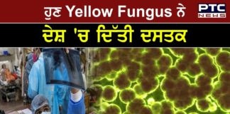 Yellow fungus cases in UP : Know why it can prove more dangerous than black, white fungus