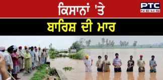 Paddy crop of farmers in Patiala submerged in hundreds of acres of water