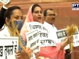 Harsimrat Kaur Badal distributes wheat strands outside Parliament, reminds politicians about farmers