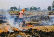 Paddy residue burning reduced in Punjab, Haryana, UP: Centre